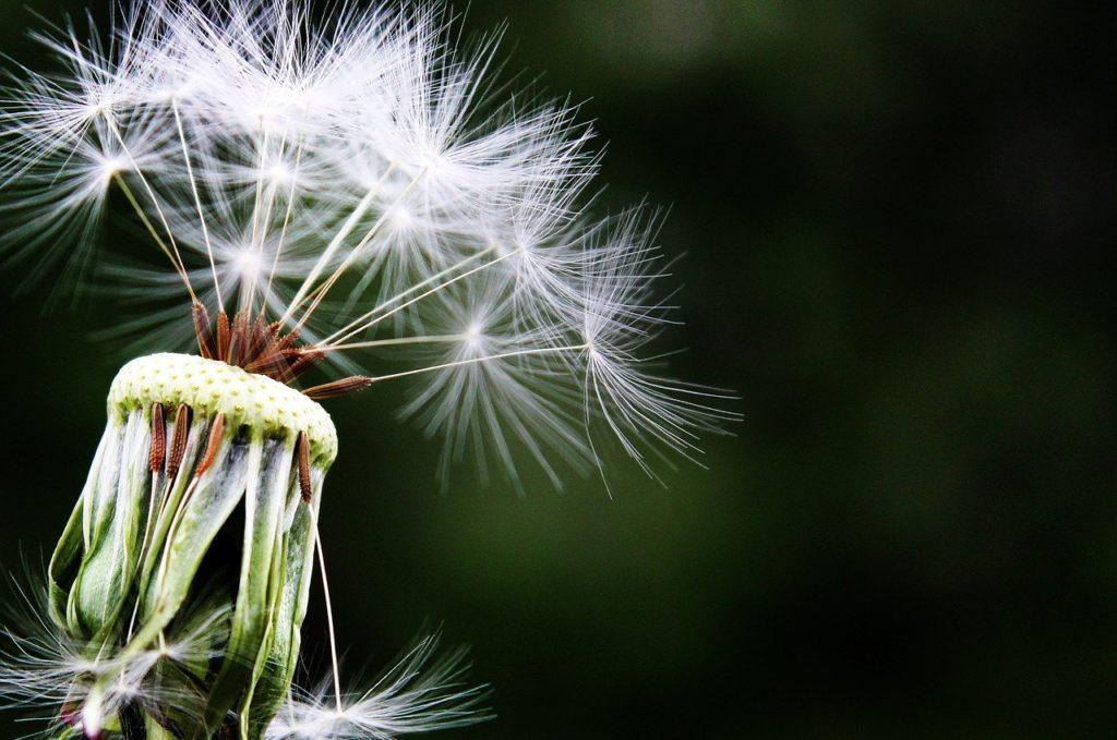 Integratori per allergie rimedio naturale